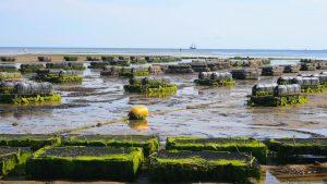 Μεταποίηση προϊόντων αλιείας & υδατοκαλλιέργειας