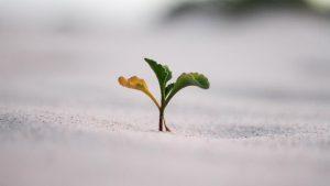 Επενδύω στη Θεσσαλία | Πρόγραμμα ΕΣΠΑ | Prisma Consulting